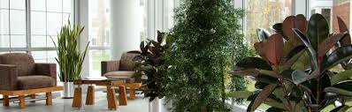 plants for office space. best office plants green pinterest and interior for space