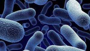 Царство Бактерии Лекция 14 Бактерии