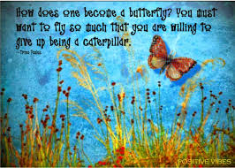 Butterfly Quotes Amazing Inspirational And Motivational Quotes About Butterflies Butterfly
