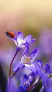 Flower Wall Paper Ladybug On Purple Flower Wallpaper Iphone Android