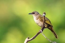 Full kicau trucukan nonstop 5 jam sangat cocok buat pancingan burung kesayangan anda mp3 duration 5:00:06 size. Download Suara Burung Trucukan Ropel Panjang Mp3 Harga