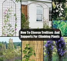 Garden Design Garden Design With How To Choose Trellises And Climbing Plant Trellis