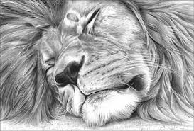 detailed lion drawings in pencil. Interesting Drawings Lion Drawing  Gallery Throughout Detailed Drawings In Pencil