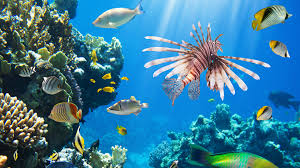 colorful coral reef wallpaper. Throughout Colorful Coral Reef Wallpaper