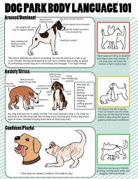 A Chart Of Dogs Dog Body Language Chart Decoding Behavior The Whoot