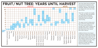 Barriers To Growing Fruit Trees It Takes Too Long Backyard