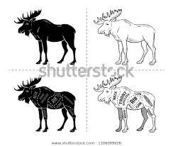 Cut Elk Set Poster Butcher Diagram Animals Wildlife Stock