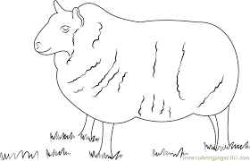 Small Picture Cheviot Sheep Coloring Page Free Sheep Coloring Pages