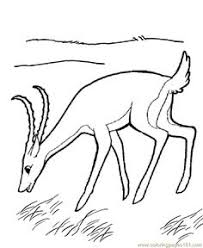 Small Picture Coloring Page Fox animals coloring pages 6 fox Pinterest