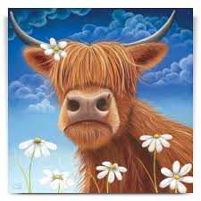 daisy highland cow canvas