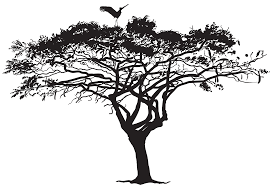 Image result for tree limbs, branches and leaves silhouette