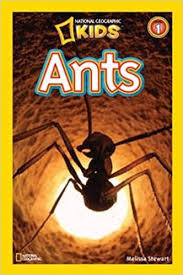 ants national geographic kids book