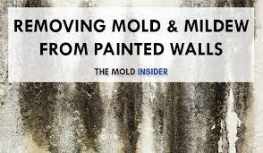 how to remove mold mildew from walls