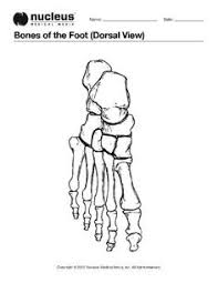 Small Picture Drawing to show the bones of the right foot dorsal or top view