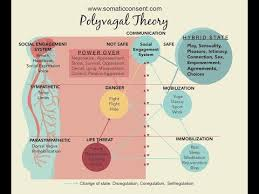 Polyvagal Theory Chart Polyvagal Theory Dr Stephen Porges Youtube