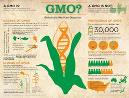 short essay on genetically modified crop