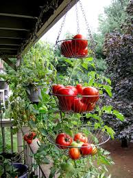 pictures of fruits garden design ideas on fruit gardening