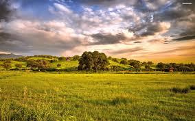 grass field. Cloudy Grass Field 839100