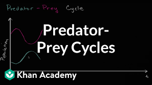 Predator Prey Cycles Video Ecology Khan Academy