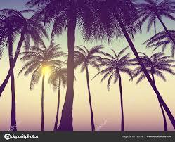 palm trees sunset tumblr. Summer California Tumblr Backgrounds Set Palms Sky Sunset Placard \u2014 Stock Vector Palm Trees