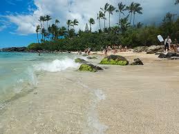 Where And When To See Turtles On Oahu Hawaii Aloha Travel