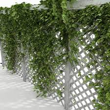 Woven Fence At Of Small Patio Covered With Climbing Plants Stock Climbing Plants For Fence