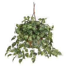 Sturdy Pothos A Versatile Hanging Plant Hanging Plants Livinghours in Indoor  Hanging Plants