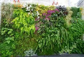 best garden plants. Best Plants For Your Vertical Living Wall Garden E