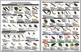 Copy Of Macroinvertebrates And Stream Quality Lessons