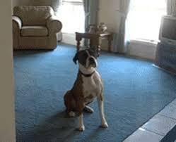 excited animal gif. Plain Gif Excited Dog GIF On Animal Gif E
