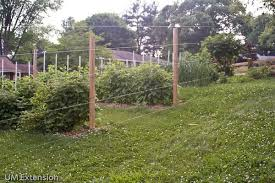 garden fence deer. Wonderful Garden Over The Years Iu0027ve Lost Many Plants And Pounds Of Produce From My Home  Garden To Hungry Whitetailed Deer A Twostrand Solarpower Electric Fence Did A  For Garden Fence Deer F