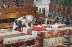 a cat stealing food from table
