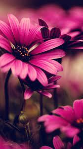 Free download Samsung Galaxy Flower ...