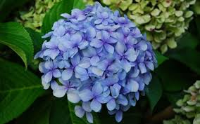 garden flowers. The 10 Garden Flowers That Can Sell Your Property E