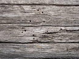 Images Gratuites Arbre Roche Branche Planche Texture Sol