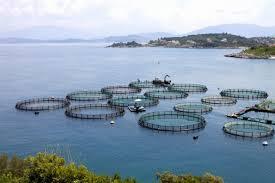 Kết quả hình ảnh cho nuôi trồng thủy sản miền Trung
