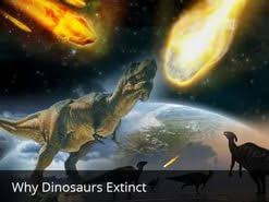 an extinct animal dinosaur essay  an extinct animal dinosaur essay