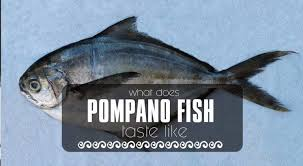 Pompano Fish What Is It And What Does It Taste Like