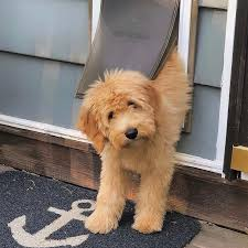 the doggie door pros and cons you need