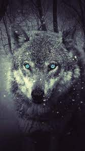 Wolf Wallpaper for iPhone 11, Pro Max ...