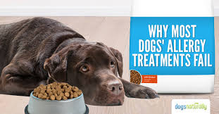 Why Most Dogs' Allergy Treatments Fail - Dogs Naturally Magazine