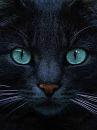 black cat with blue eyes tumblr. Brilliant Black 7 TumblrBlack Cat With Blue Eyes In Black Cat With Blue Eyes Tumblr A