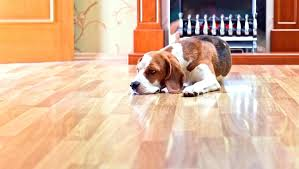 best laminate flooring and pets dog urine dogs proof