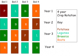 Using Crop Rotation In Home Vegetable Gardens Snohomish