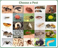 garden pest. Least Toxic Control Of Pests In The Home And Garden Pest
