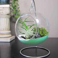 hanging glass terrariums dipped in paint with air plants beach sand and moss
