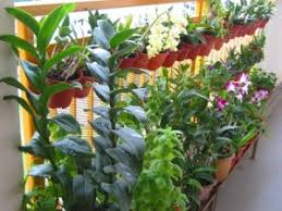 feng shui home elements plants. feng shui tips u2013 plants and wood elements by singapore master home