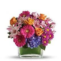 rainbow dream send flowers to los angeles