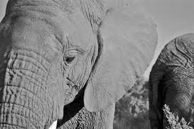 about elephants i write about elephants i write about other diamond on forehead 2