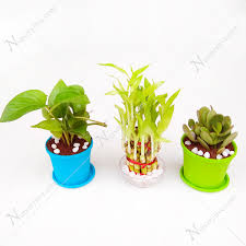 feng shui plant office. Lucky Money Attracting / Feng Shui Table Top Office Desk Plants Plant